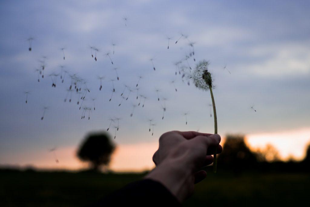 Das Bild zeigt vom Wind verwehte Pusteblume.